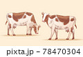 Set of engraved cow illustrations 78470304
