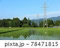 6月の田園風景 田植え 軽トラック 78471815