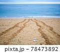 ウミガメの足跡 78473892