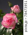 ピンクのバラ 78473951