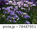 花盛り 78487951