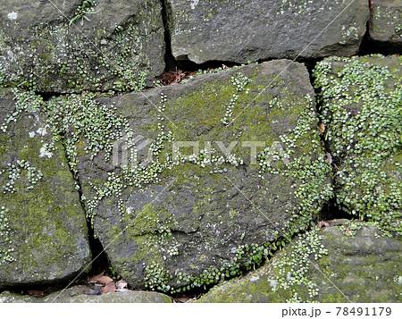 城の跡地にある城壁のアップした写真 78491179
