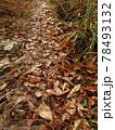 秋の木の葉の小道を散歩 78493132