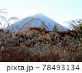 富士山と紅葉とススキの原 78493134