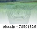 日本酒 田んぼ イメージ 78501326