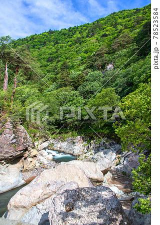 春 塩原渓谷 箒川 野立て岩周辺の景色      78523584