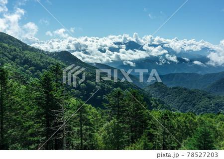 緑の葉が濃い木々と山の頂上を囲む雲 78527203