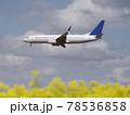 菜の花と飛行機 78536858