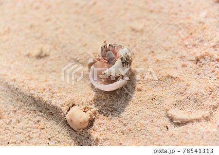 砂浜のヤドカリ 78541313