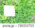 四つ葉と珍しい五つ葉のクローバーを周りに添えた白紙の正方形のスペースのモックアップ 78553755