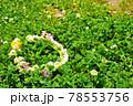 シロツメクサ畑とクローバーで作った花のかんむり 78553756