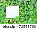 白詰草の畑を背景に四つ葉のクローバーを二つ添えた白い正方形のフレームのモックアップ 78553760
