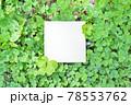 シロツメクサの下を背景に四つ葉のと五つ葉のクローバーを周りに添えた白いタイトルフレームのモックアップ 78553762