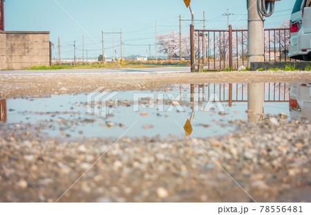 桜咲く田園風景と水溜まりに映り込む交通標識 78556481