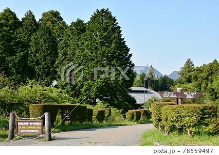 箱根町 箱根やすらぎの森 散策路入口と新緑 78559497