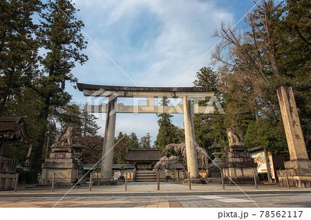 滋賀県の多賀大社の大鳥居と桜咲く春の風景 78562117