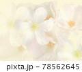マチスとバラ ふんわりとした背景素材 テクスチャ 78562645