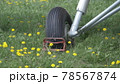 An-2 aircraft landing gear in the grass and yellow dandelions 78567874
