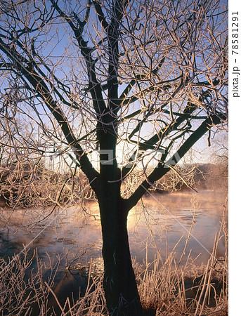 朝日に輝く樹氷(北海道・標茶町) 78581291