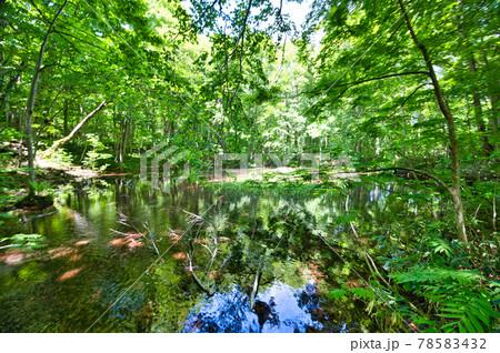 青森県八甲田にある蔦七沼のひとつ、鏡沼の風景 78583432