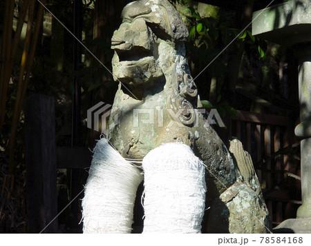 長崎諏訪神社のコヨリを巻いた止め事成就の狛犬 78584168