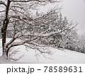 五箇山の雪景色 78589631