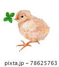 四つ葉のクローバをくわえた生まれたばかりのひよこの水彩イラスト 78625763