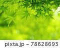 新緑素材【モミジの葉っぱ】 78628693