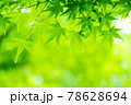 新緑素材【モミジの葉っぱ】 78628694