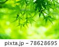 新緑素材【モミジの葉っぱ】 78628695