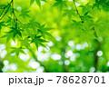 新緑素材【モミジの葉っぱ】 78628701