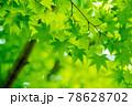 新緑素材【モミジの葉っぱ】 78628702