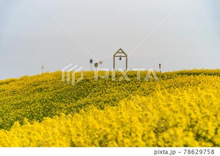 菜の花畑の幸せの鐘 78629758