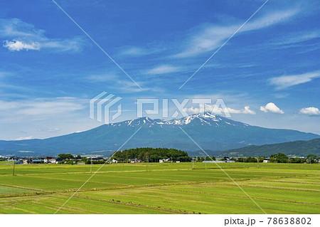 初夏の鳥海山(出羽富士)と休耕田 山形県酒田市 78638802