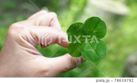 緑の島で見つけた、幸運を呼ぶ四つ葉のクローバー 78639792