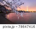 Washington DC, USA at the tidal basin with Washington Monument 78647416