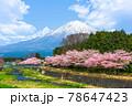 Mt. Fuji viewed from rural Shizuoka Prefecture in spring season 78647423