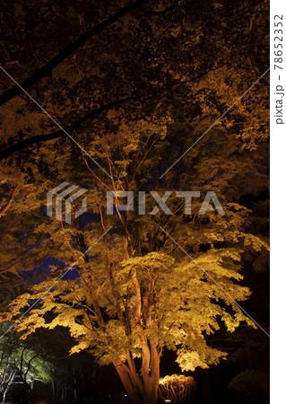 【縦構図】日本の紅葉~函館市香雪園にて 78652352