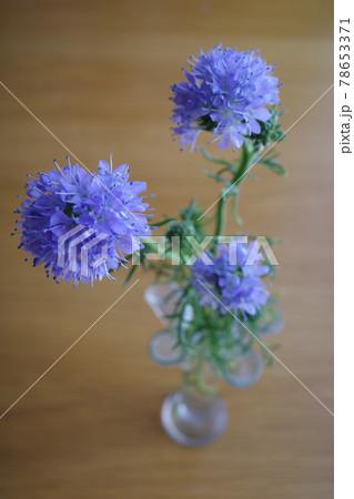 花瓶に生けられた3輪のギリアレプタンサ 78653371
