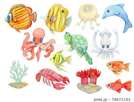 海の生き物タコイカ熱帯魚など 78672102