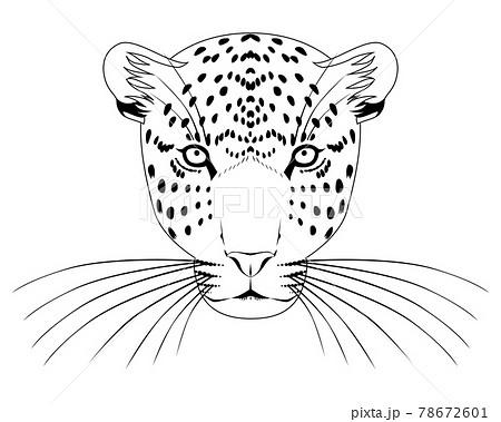 ヒョウの顔(正面)・白黒 78672601