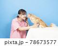 犬の診察をする女性獣医師 78673577