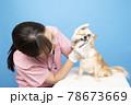 犬の診察をする女性獣医師 78673669