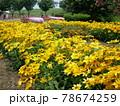 写真素材 公園 お花畑 78674259