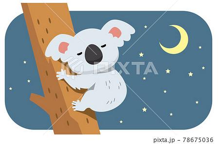 眠るコアラと夜空のイラスト素材 78675036