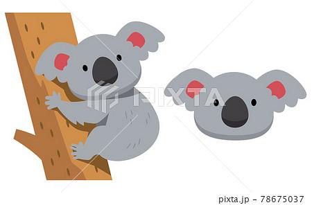 コアラとコアラの顔のイラスト素材 78675037