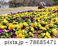 お花畑に座り込む老夫婦 78685471