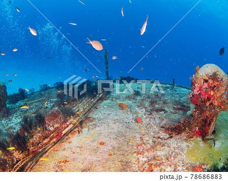 黒いハネガヤに覆われた海底ケーブル (プラヤ・デル・カルメン、メキシコ) 78686883