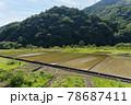 水田風景 78687411