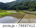 水田風景 78687412